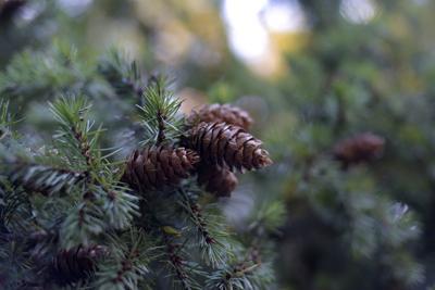 102517-adh-nws-christmas-tree-0012.jpg (copy)