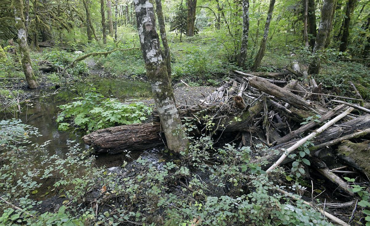 Shiver River Tree Farm15-my