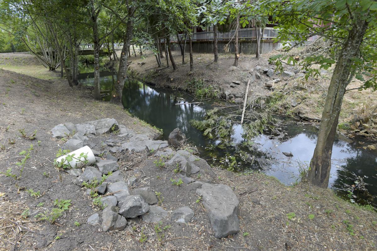 Dixon Creek vegetation 01