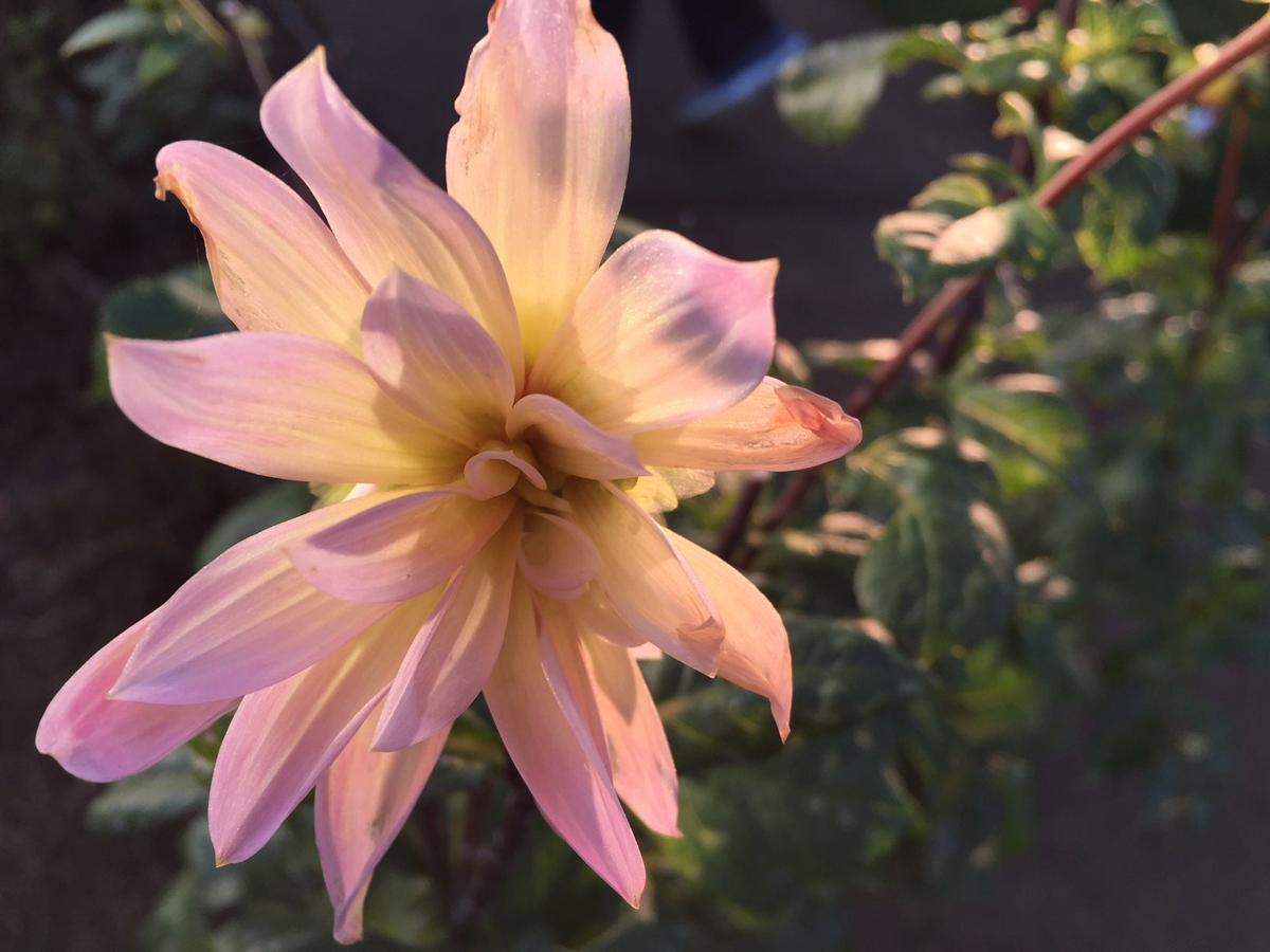 Flower 12-7-17