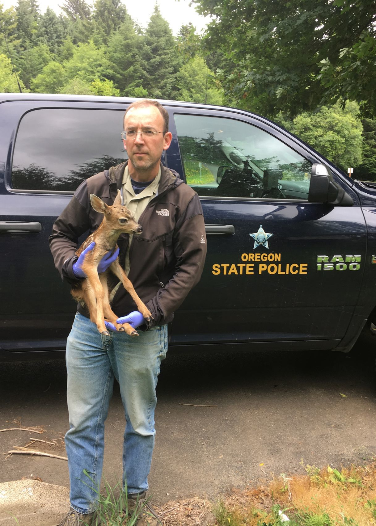 Baby Deer June 2019
