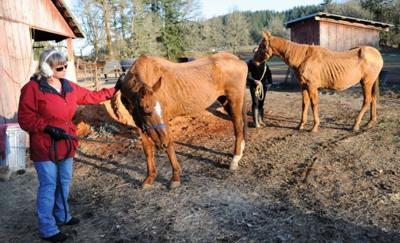 Too many horses | Local | gazettetimes com