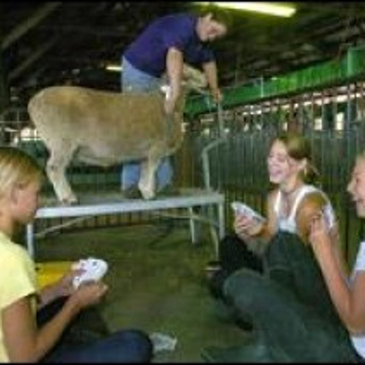 Contests abound at Benton County Fair | Local | gazettetimes com