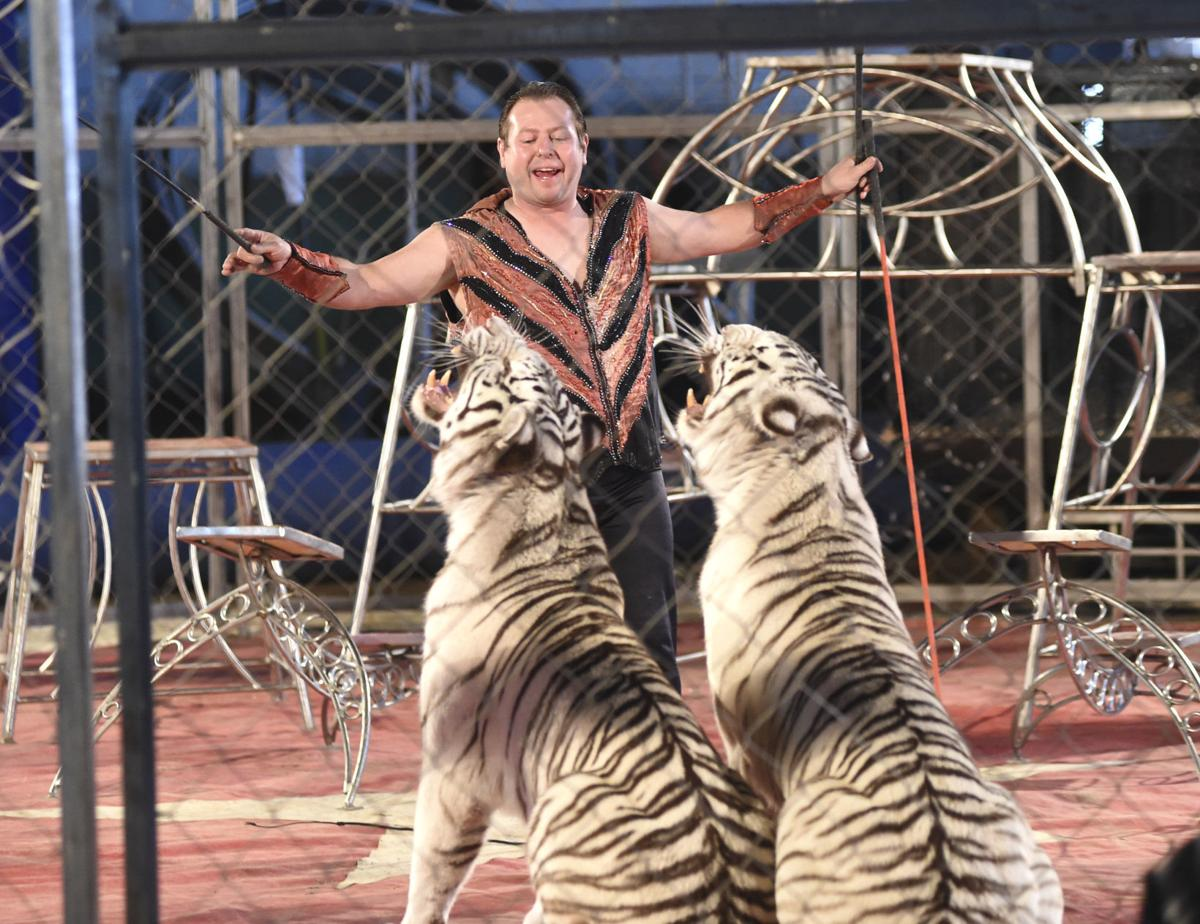 Animal Cruelty In Porn circus leaves exotic animals behind: no tigers or elephants