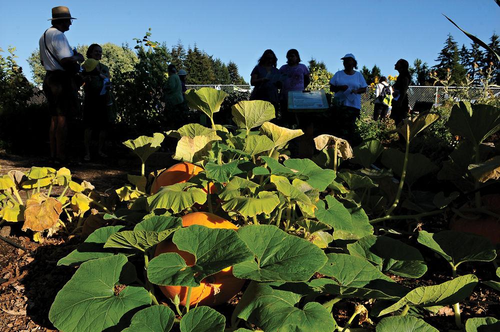 08-28 edible garden1-ac.jpg