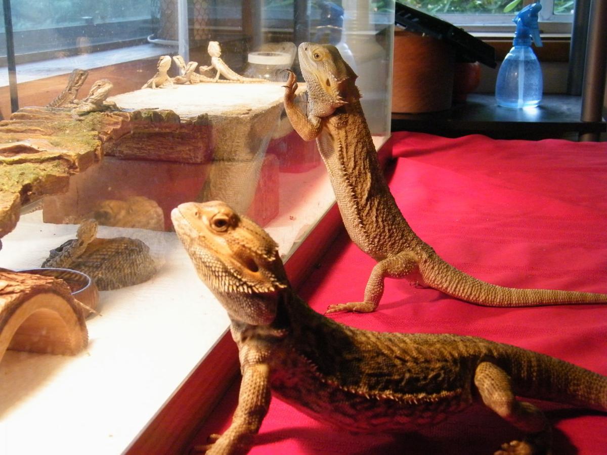 Scio girl discovers dragons | Local | gazettetimes com