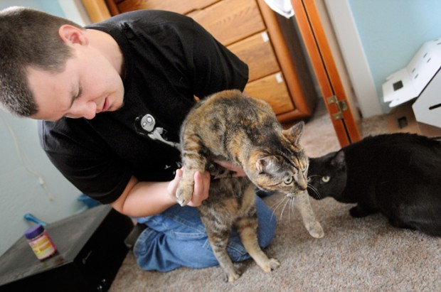 Cats survive apartment fire - pet safety tips