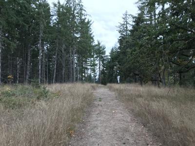 Beazell Memorial Forest (copy)