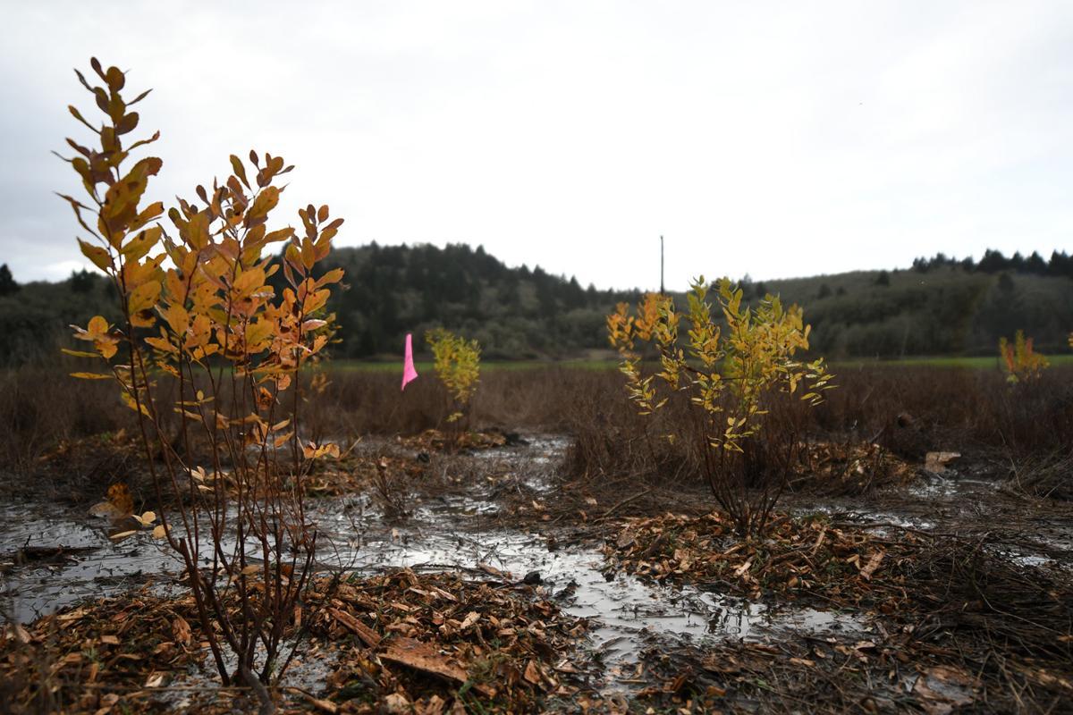 dunawi-creek stock 06