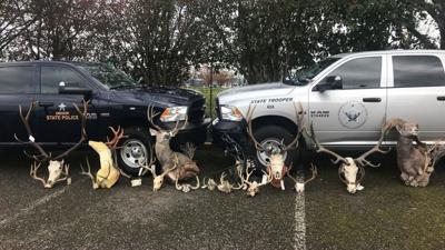 wildlife crimes