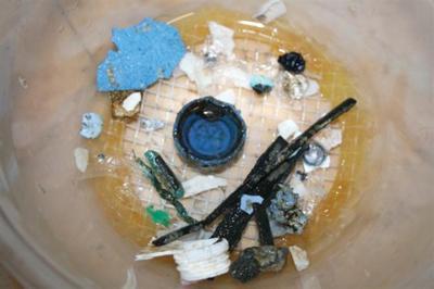 Ocean plastic trash