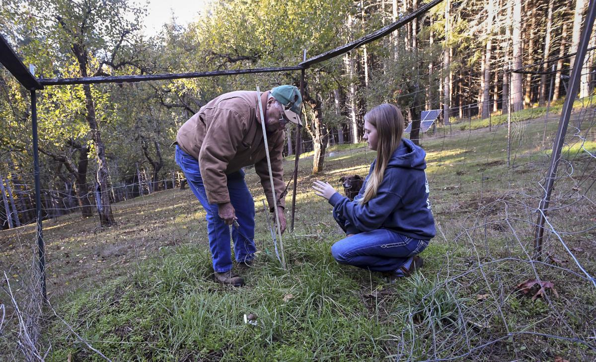 tree farmers 04