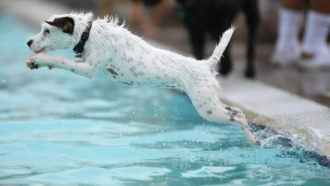 Osborn Aquatic Center Dog Day