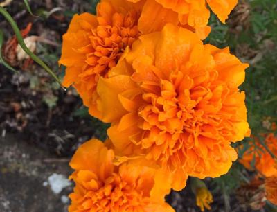 Orange Crinkle 10-11-18