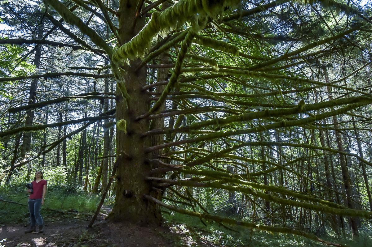OSU Forests 01