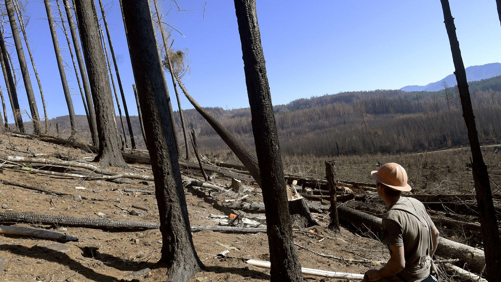 No time to waste: Freres begins post-wildfire timber salvage