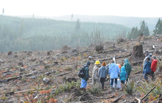 Starker Forests tree planting: Scenic