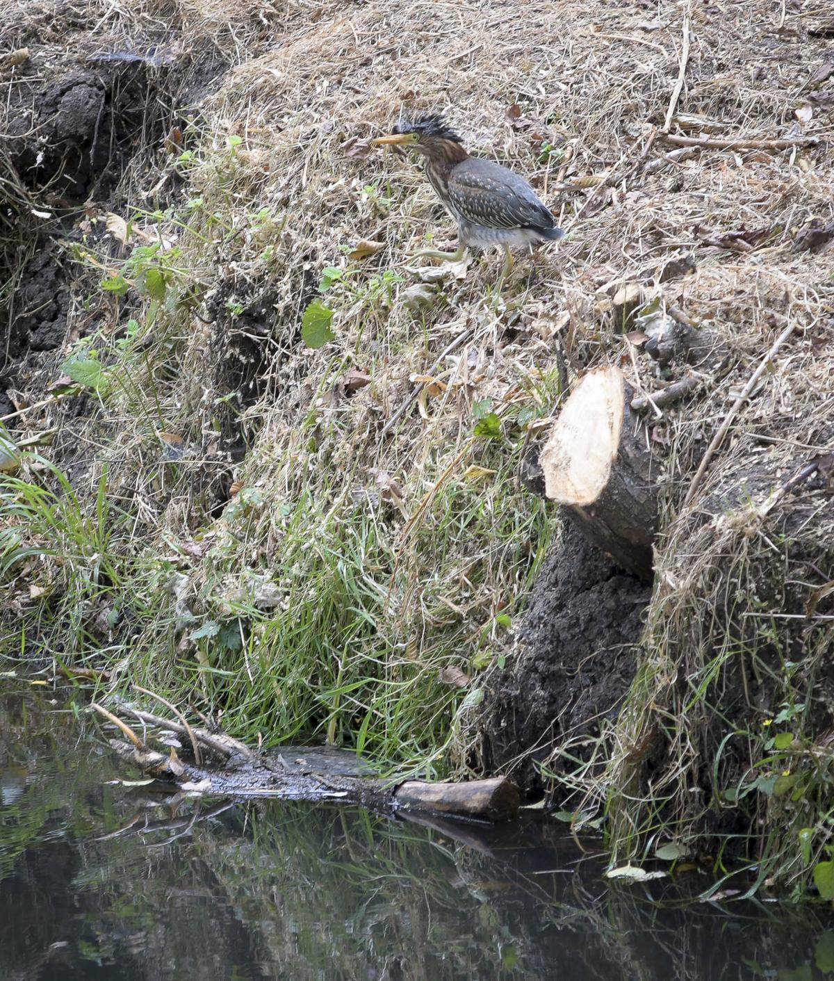 Dixon Creek vegetation 02