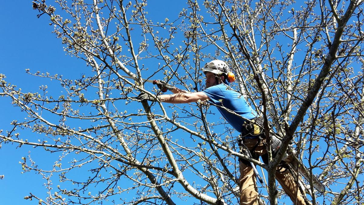 pruning-pywell-13