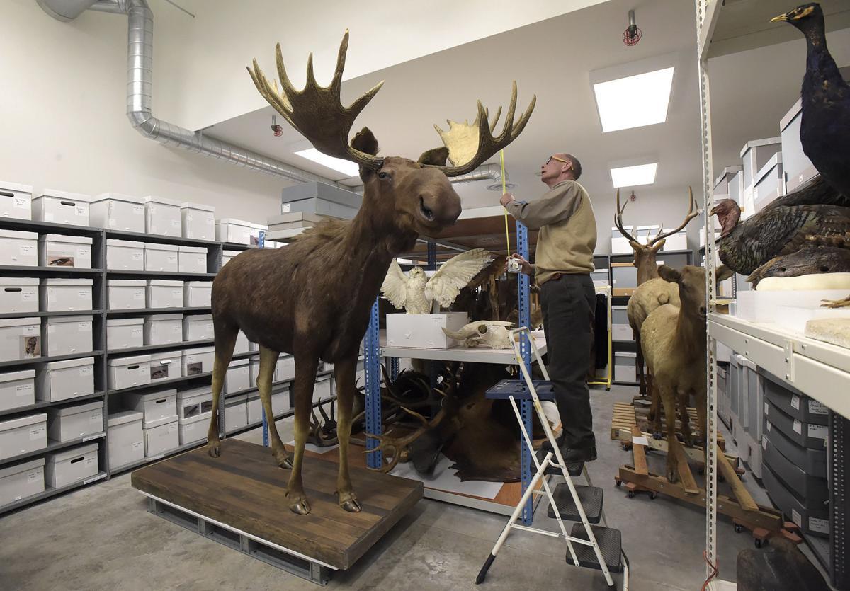 Bruce The Moose 01