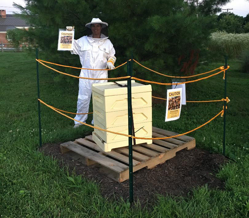 Installing the hive
