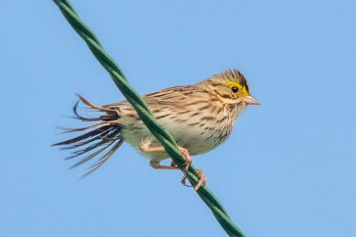 2019-06-28-sparrow.jpg
