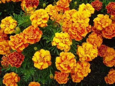 Floral entries for South Mountain Fair