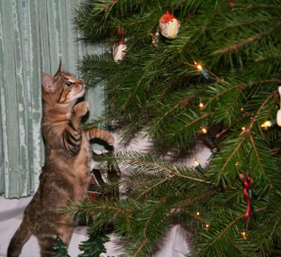Catnip under the tree