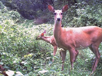 Check station, deer feed ban in place after CWD found