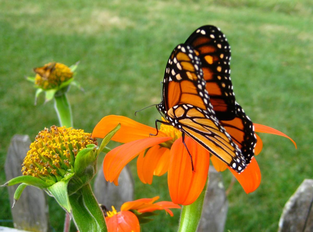 2019-07-26-GGC butterfly.jpg