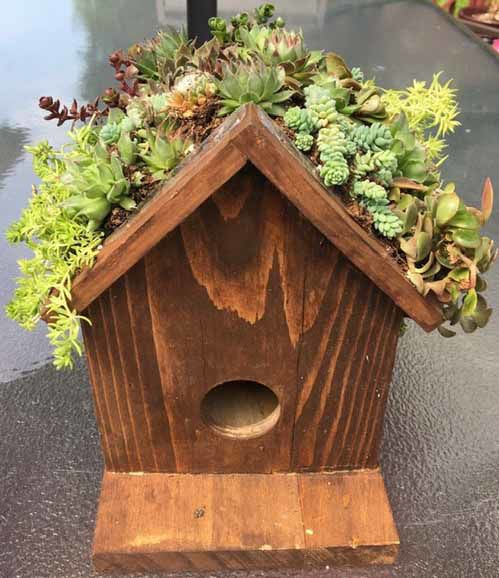 A succulent bird house