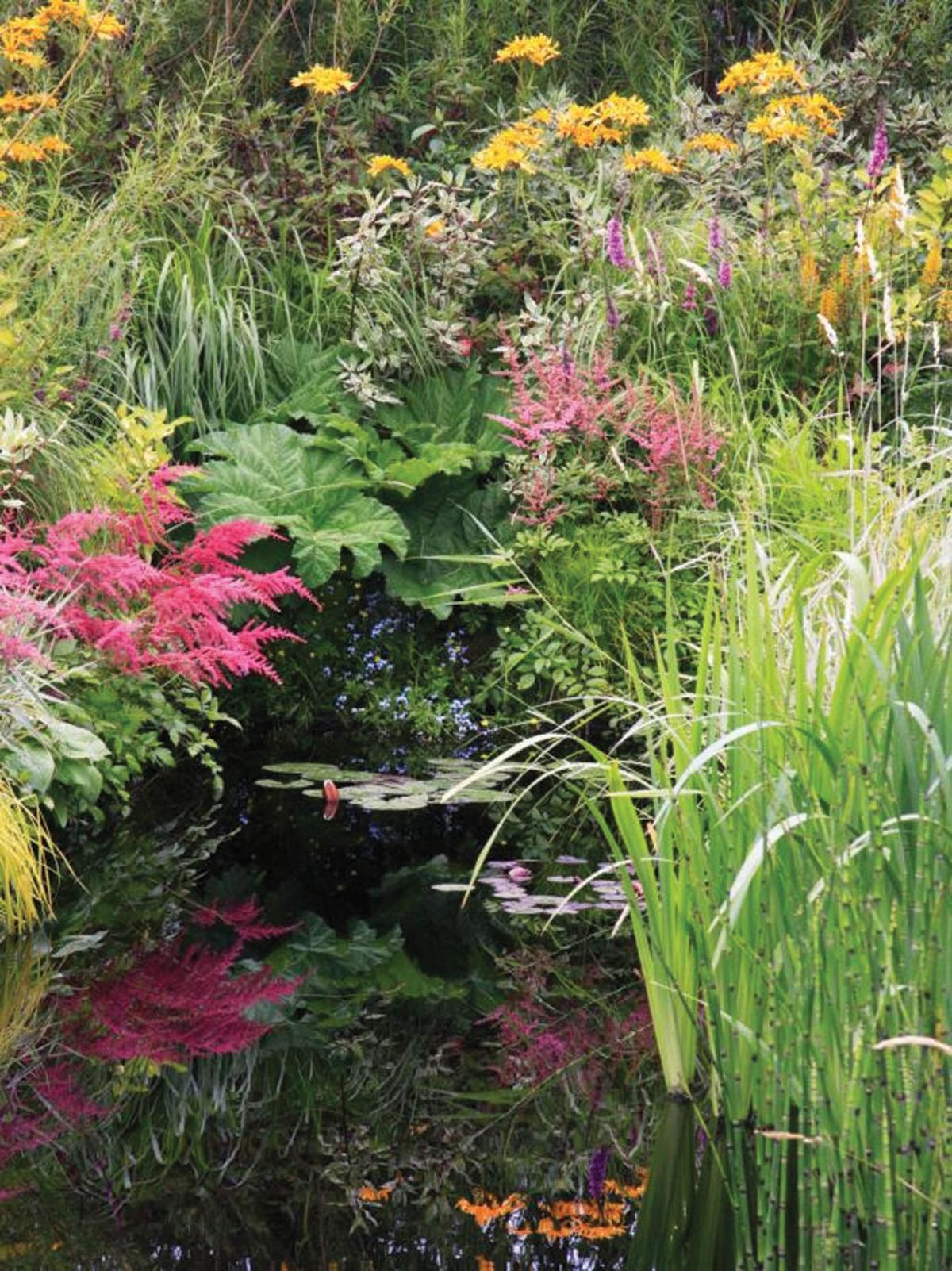 master gardener a bog garden and its habitat - Bog Garden