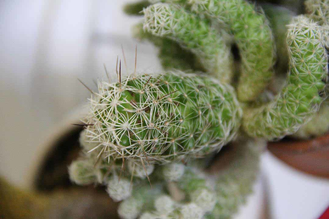 2019-12-27-cactus2.jpg