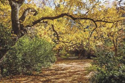Boyce Tompsn Arboretum