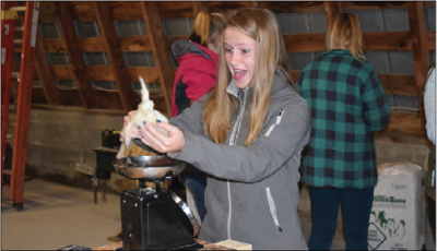 Gladwin Junior Alaina Cuddie was one of the Ag Science students whose exposure to farm animals this year included broiler chicks.