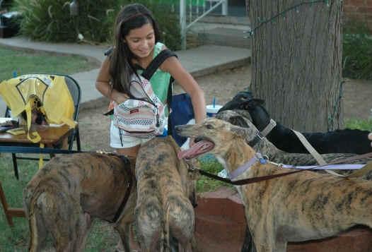 Adoptable greyhounds