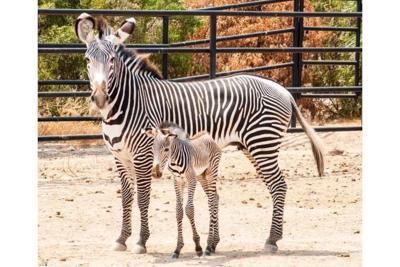 The Wildlife World Zoo, Aquarium & Safari Park
