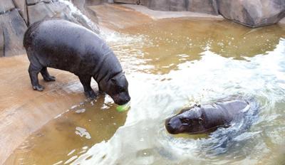 The Wildlife World Zoo