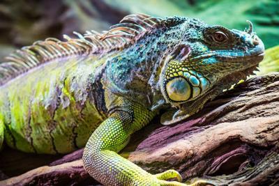 Wildlife World Zoo Lizard on a stick