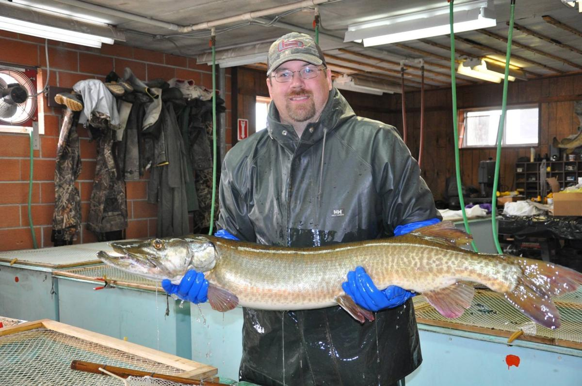 Muskie picture