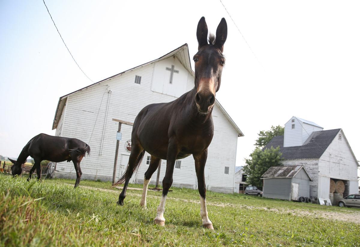 Reicherts' mules - Sarah