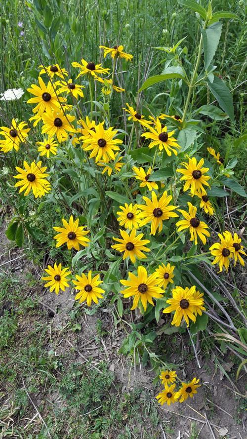 WCCB Wildflower Walk.jpg