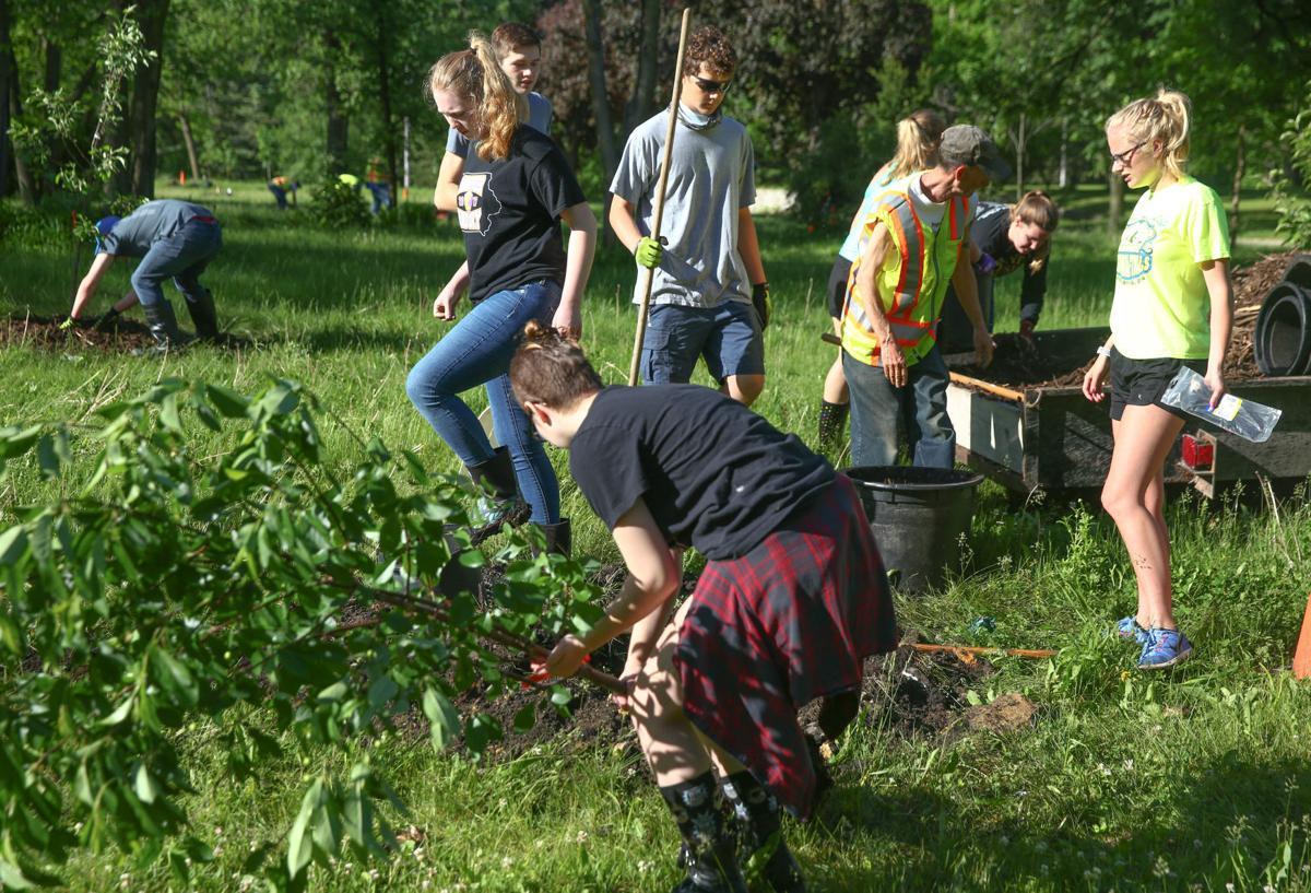 YIELD - tree planting 2