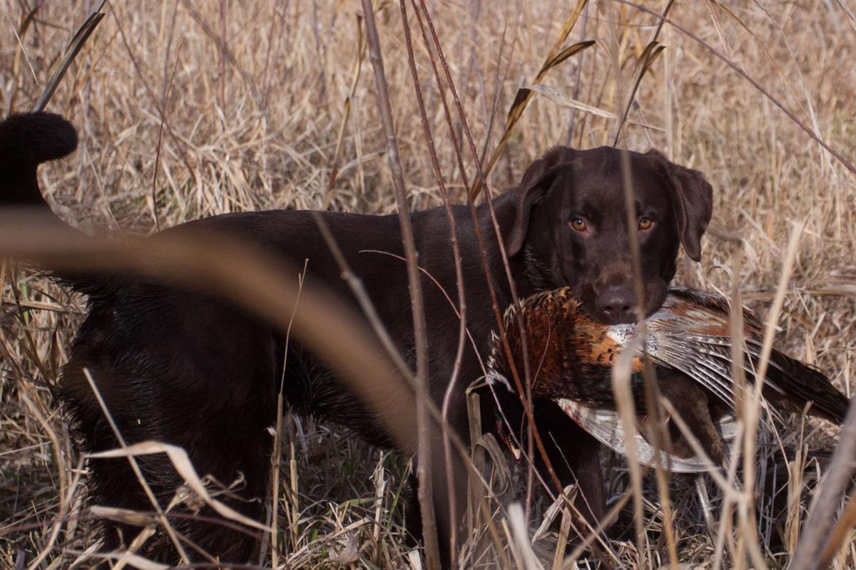 Toby's first pheasant