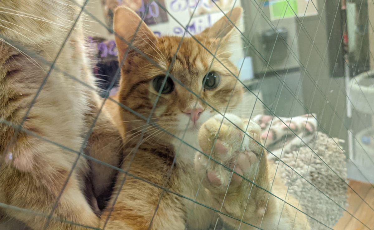NI Humane Society pets for adoption-1-2.jpg