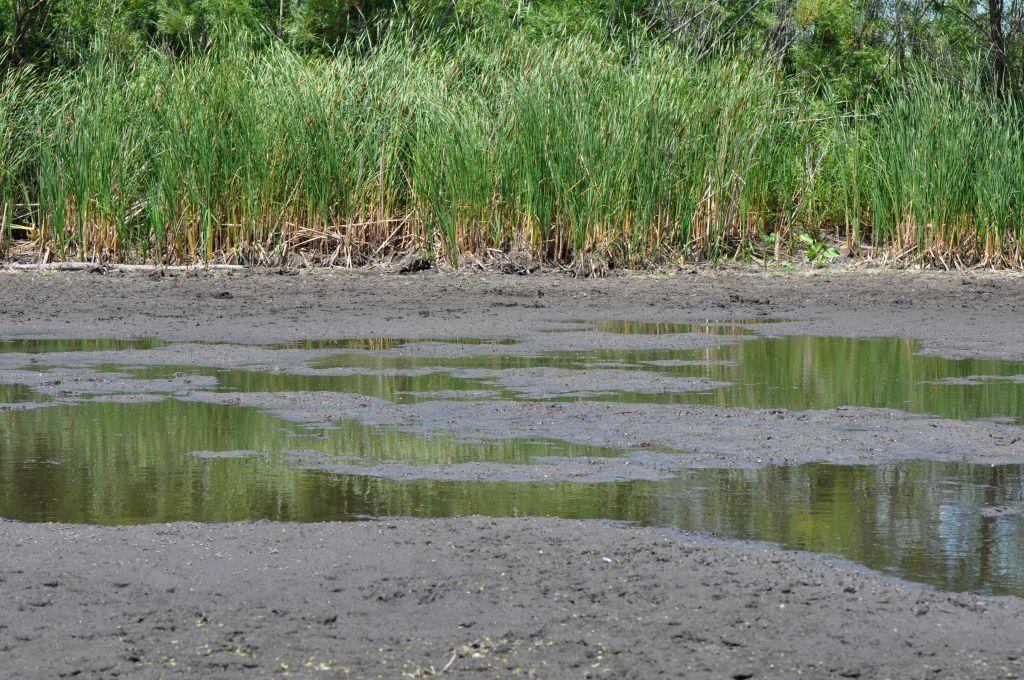 Wetland mudflat