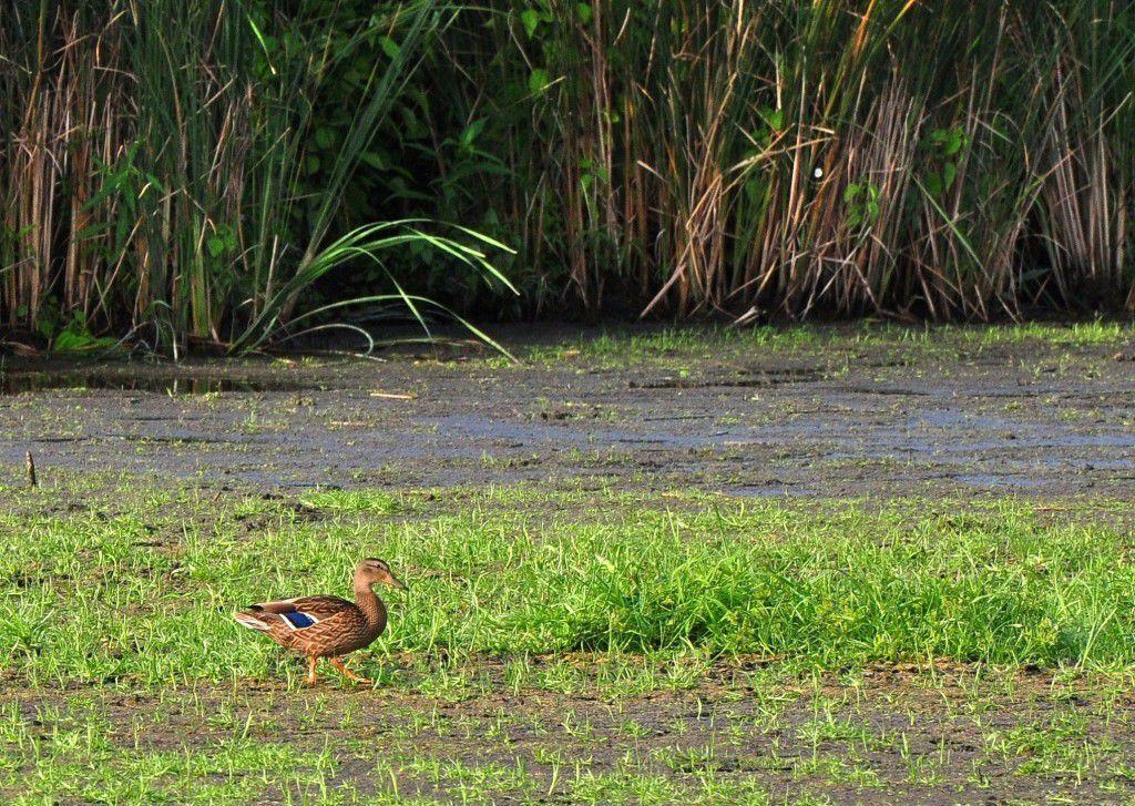 Wetland drought