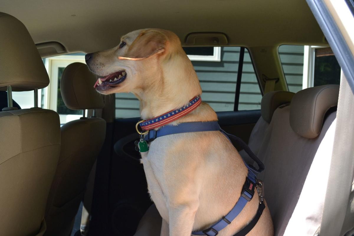 Is your pet a distraction while driving? (image)