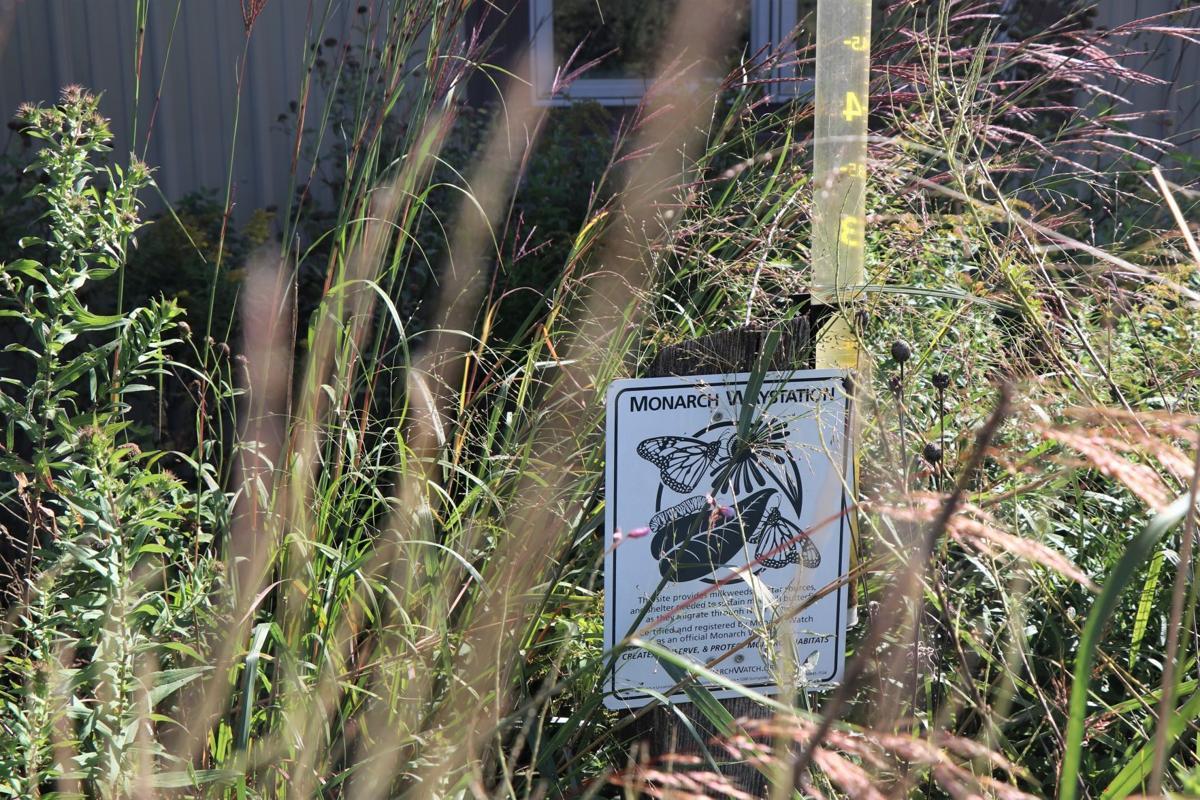 Monarch waystation at nature center