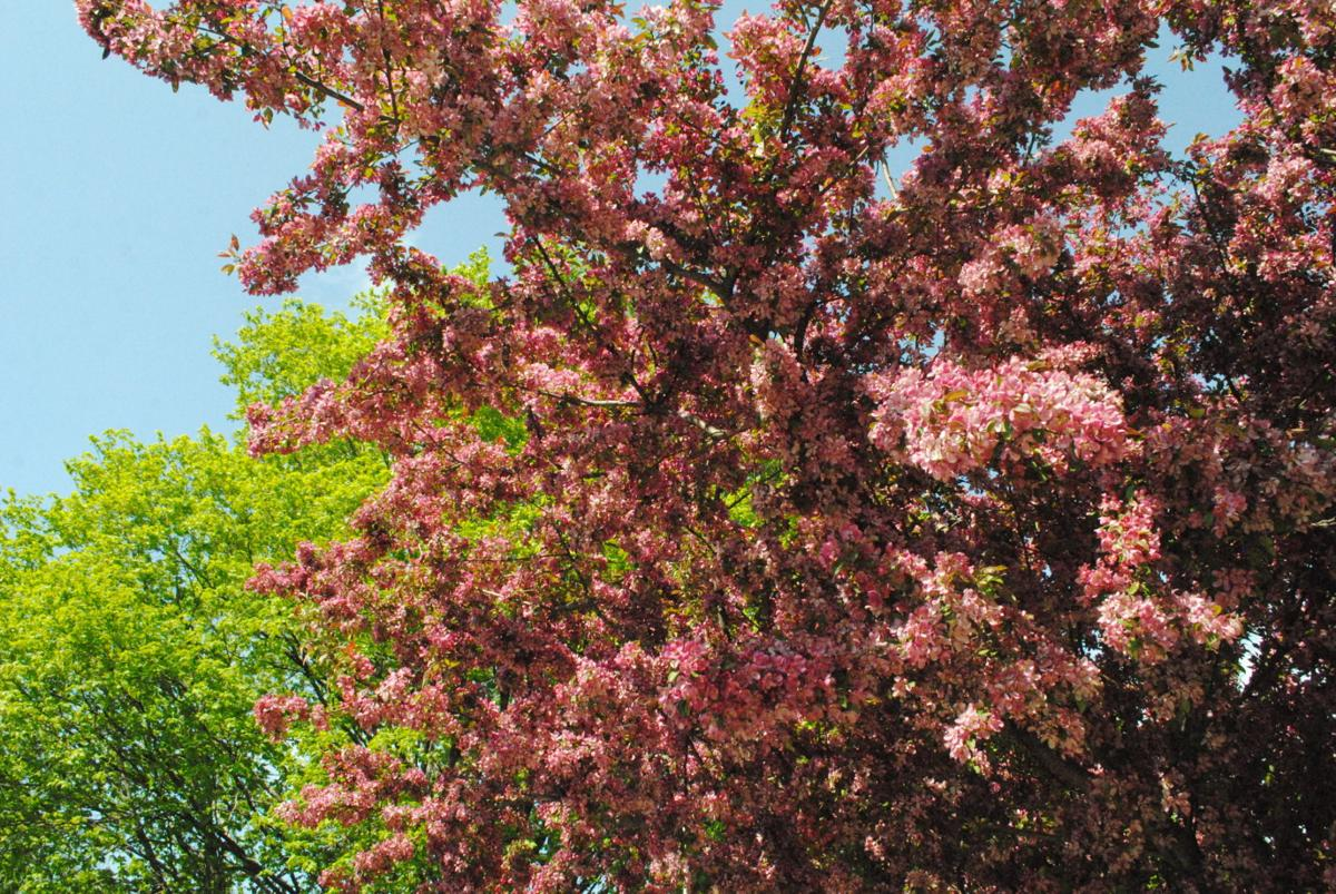 Yard and garden: Handling early-flowering trees and shrubs in ...